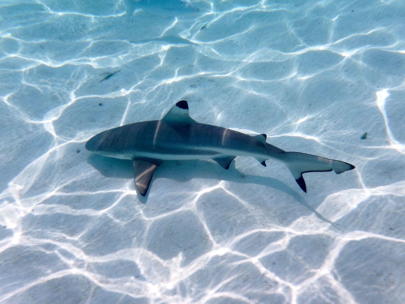 Un, deux, trois, on saute dans l'eau: BONJOUR POINTE NOIRE!!!