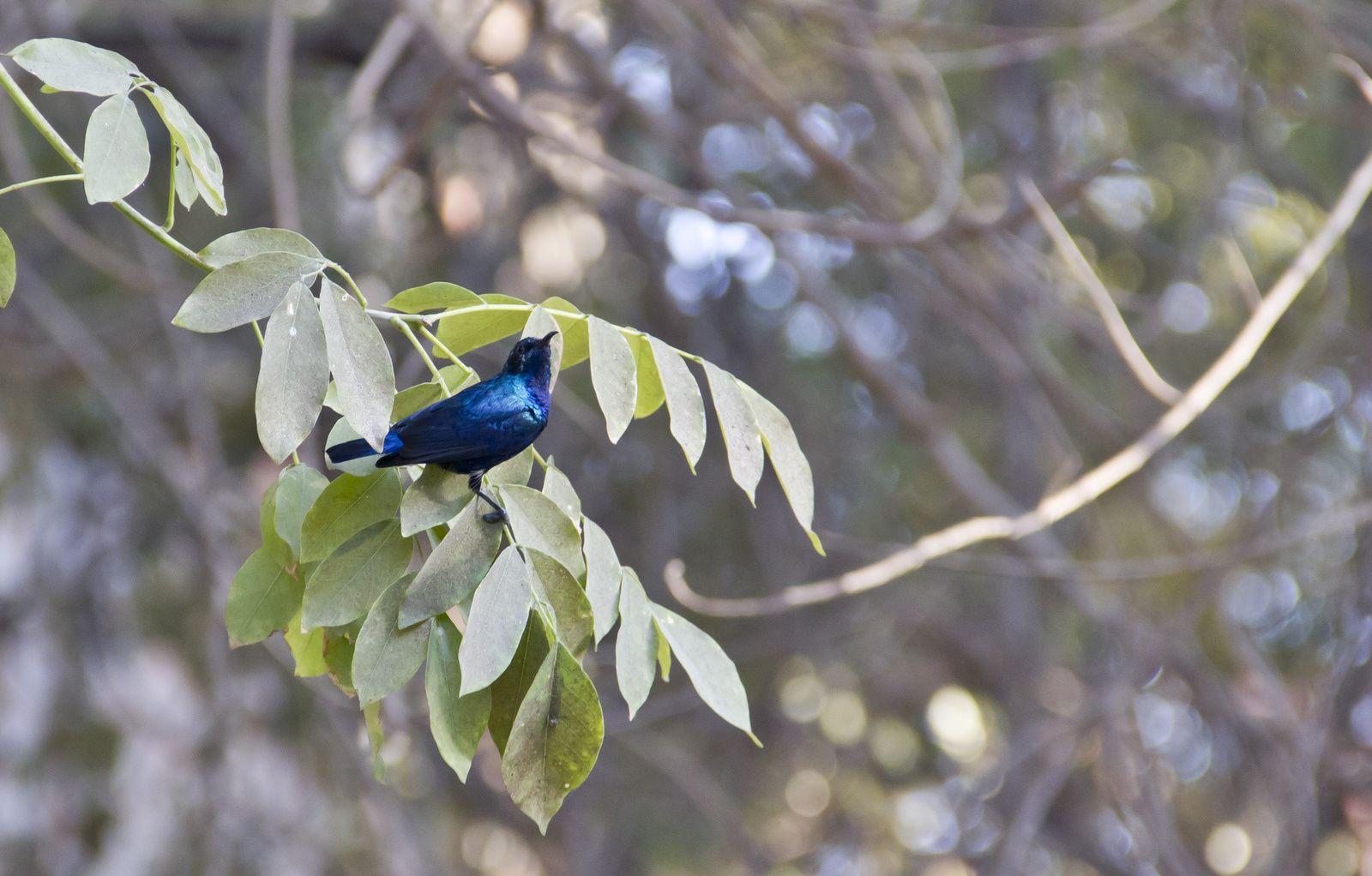 Photographies d'oiseaux.