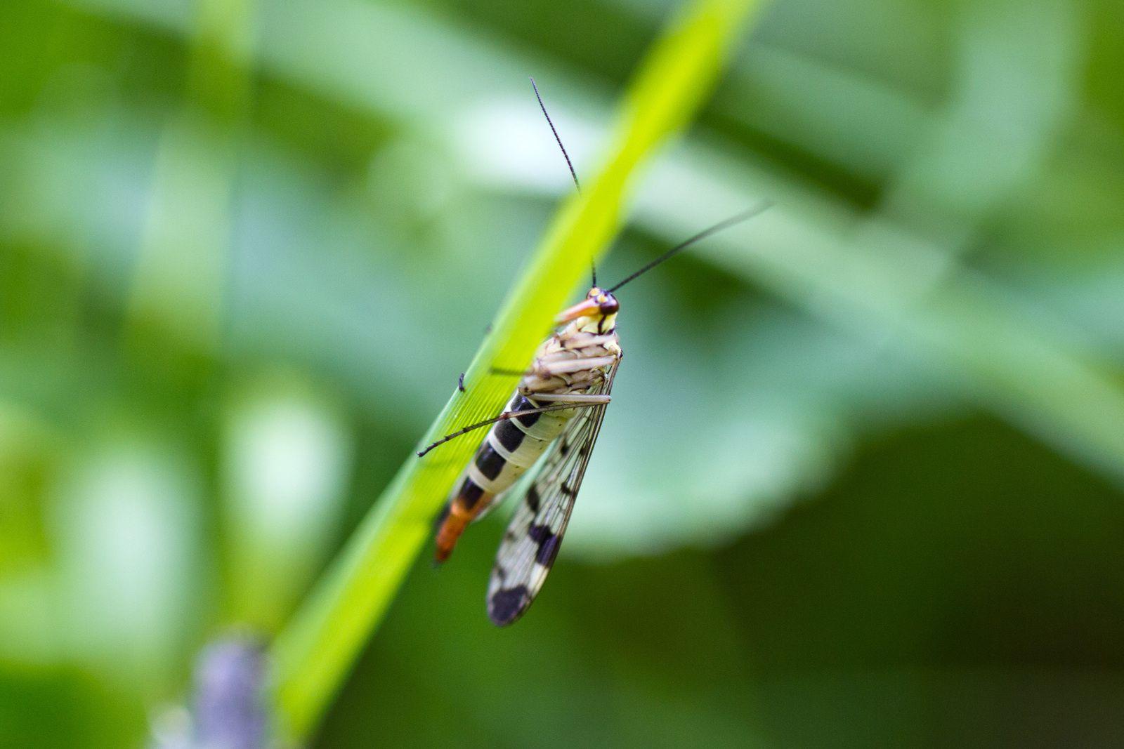 Quelques insectes ...