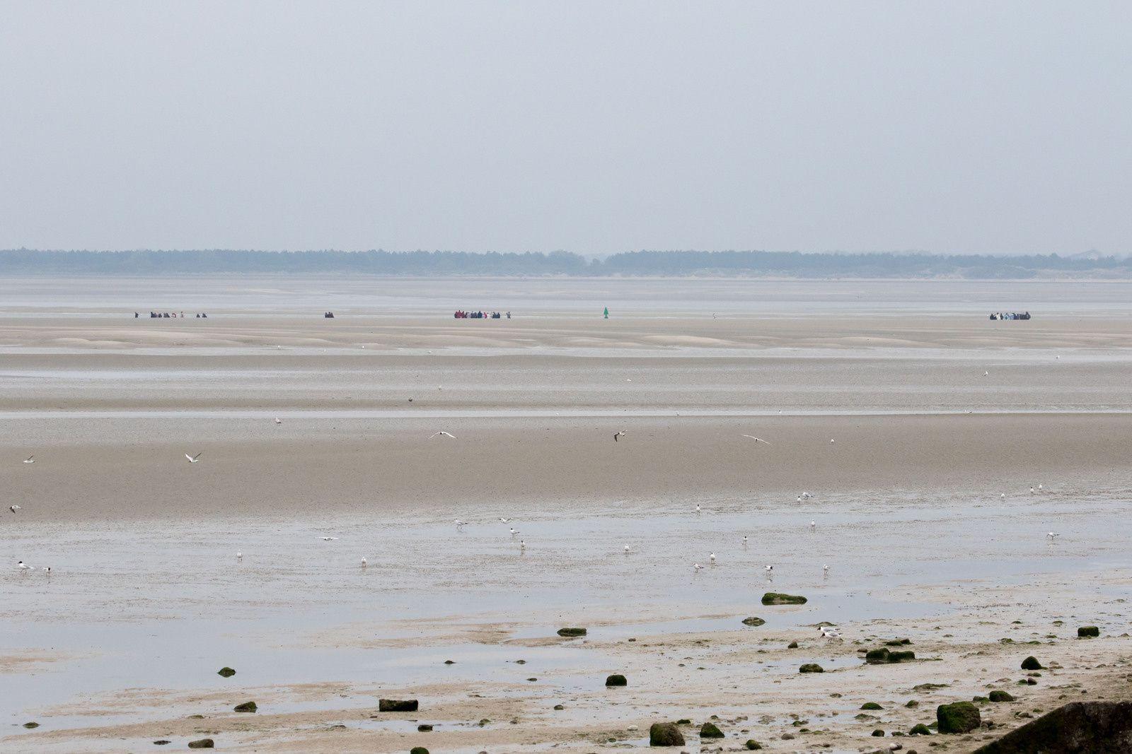 Les promeneurs en chemin vers les phoques