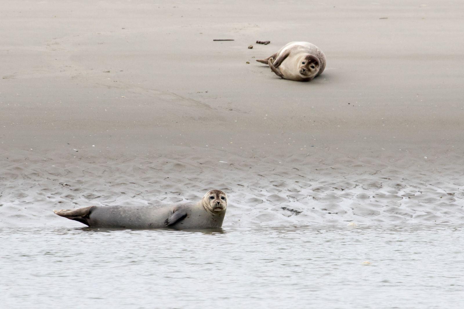 Week-end en baie de Somme - Les phoques !