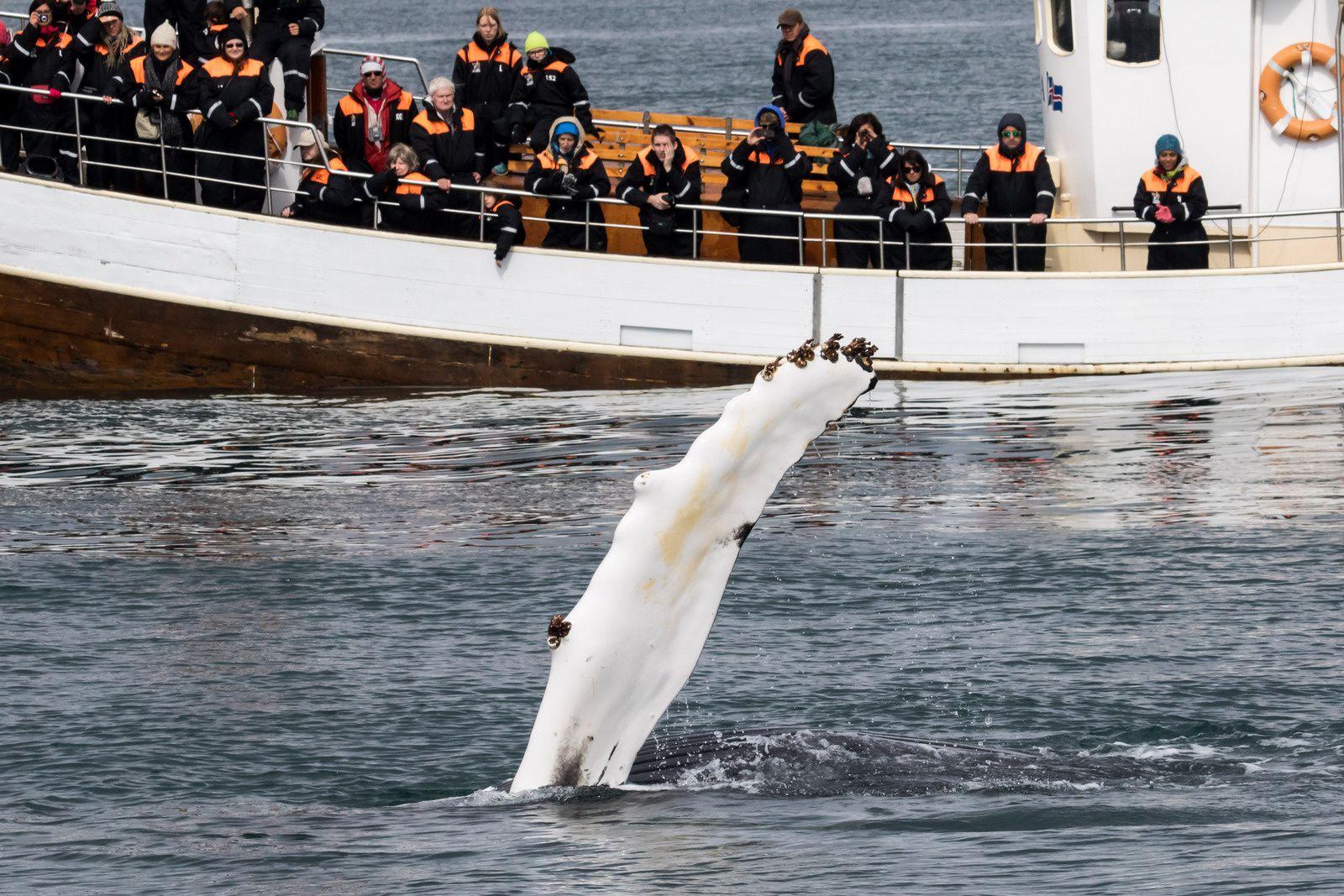 Images d'une baleine à bosse