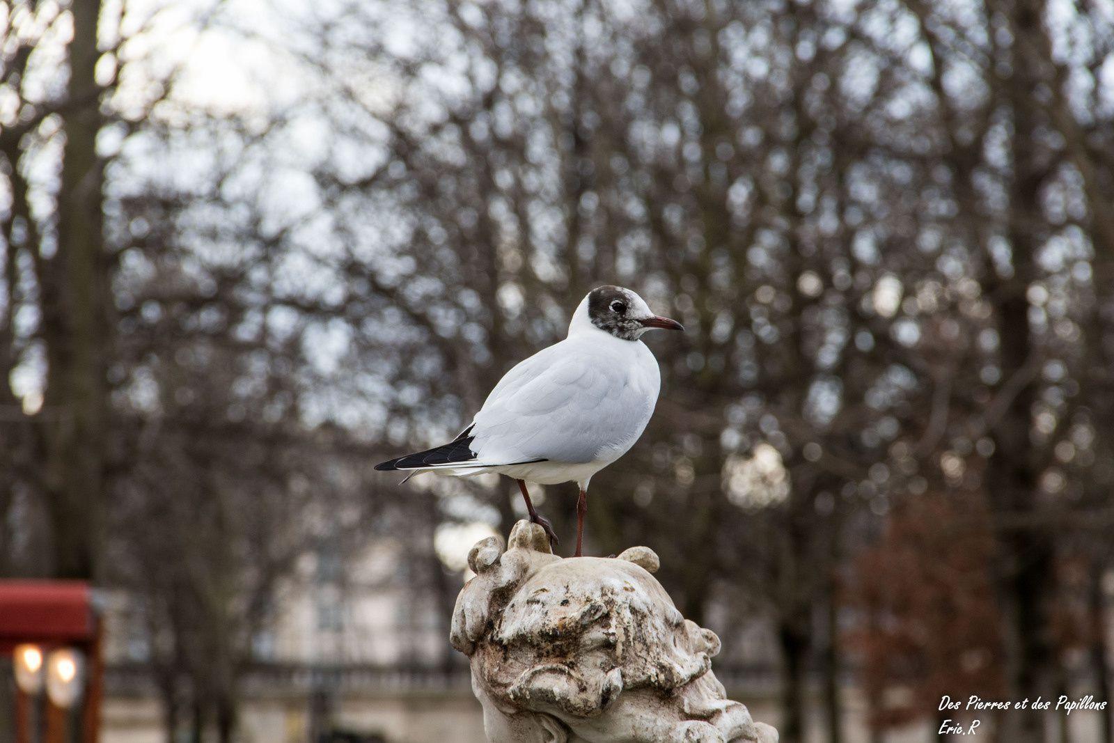 Le jardin des tuileries, les statues, la grande roue