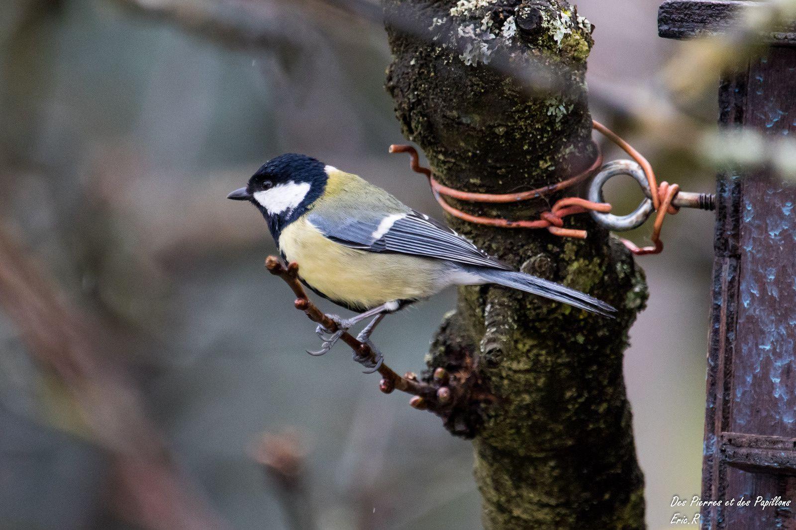 De nouveaux oiseaux !