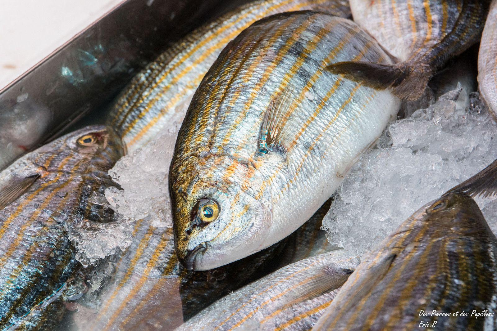 Étalages du marché aux poissons