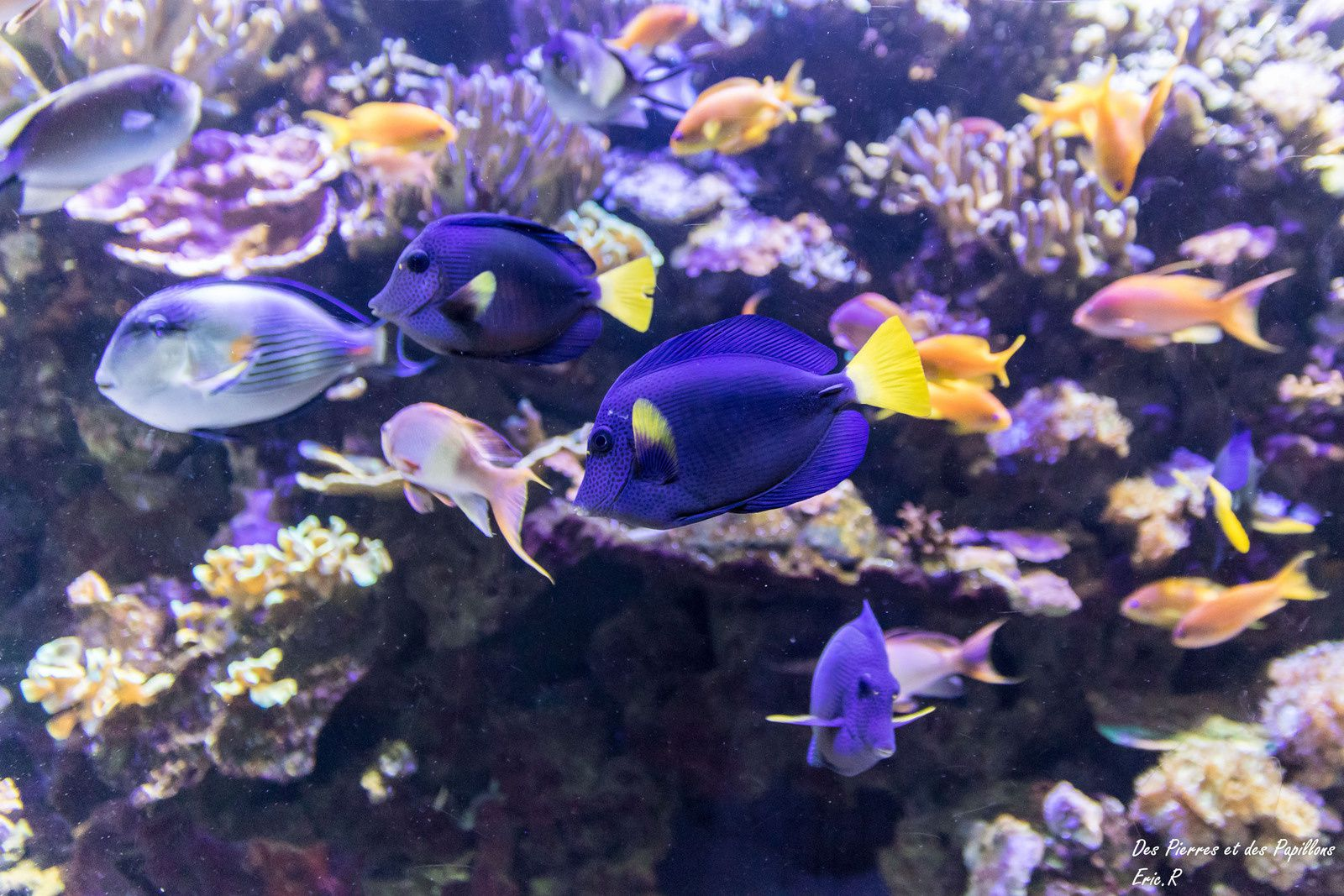 Visite de &quot&#x3B;l'Aquarium du palais de la Porte Dorée&quot&#x3B;.