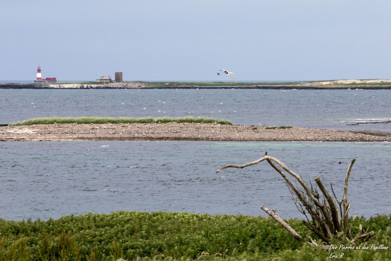 Vue en direction de l'île de Longstone depuis Inner Farne.