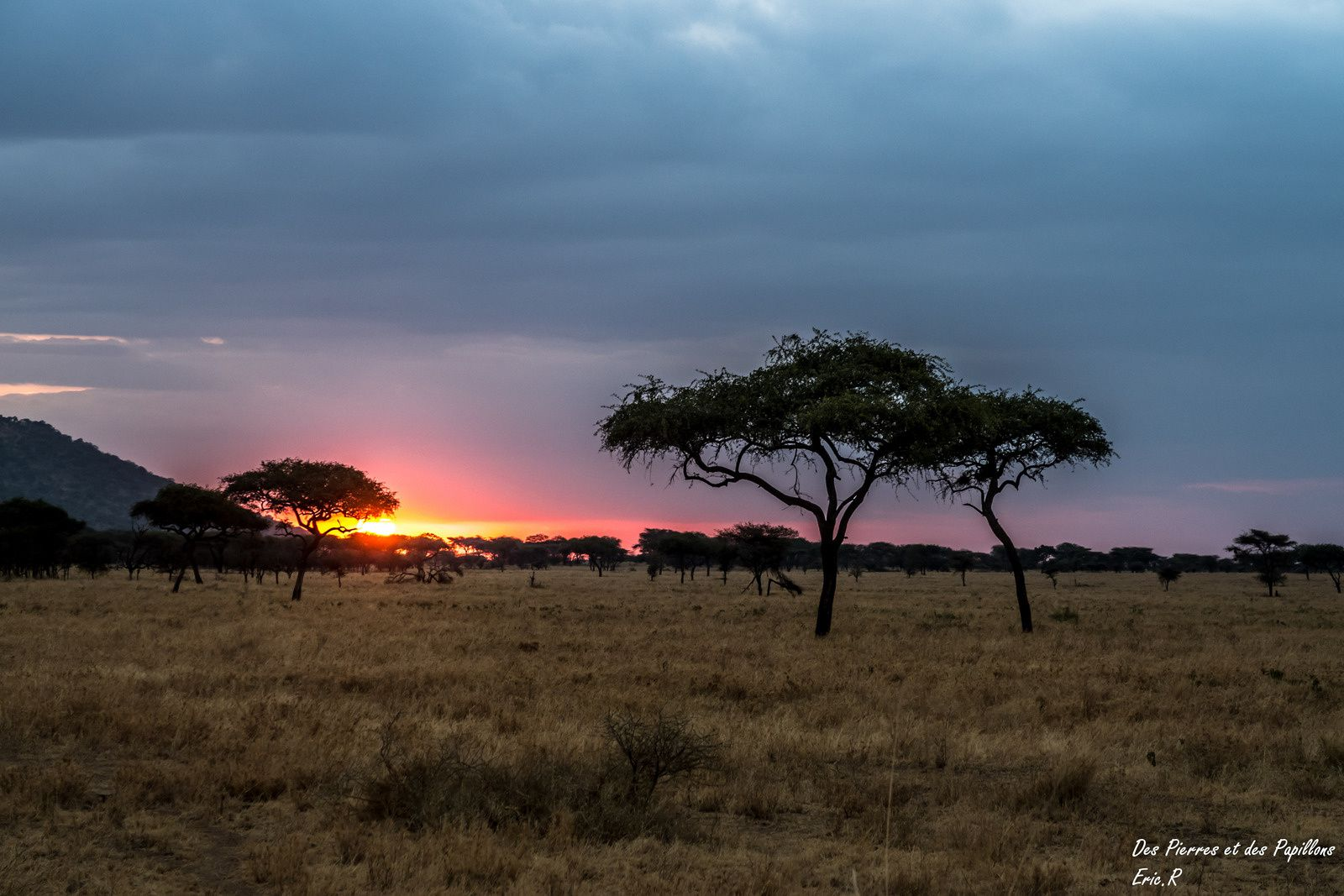 Tanzanie : une journée en immersion dans le parc national du Serengeti.