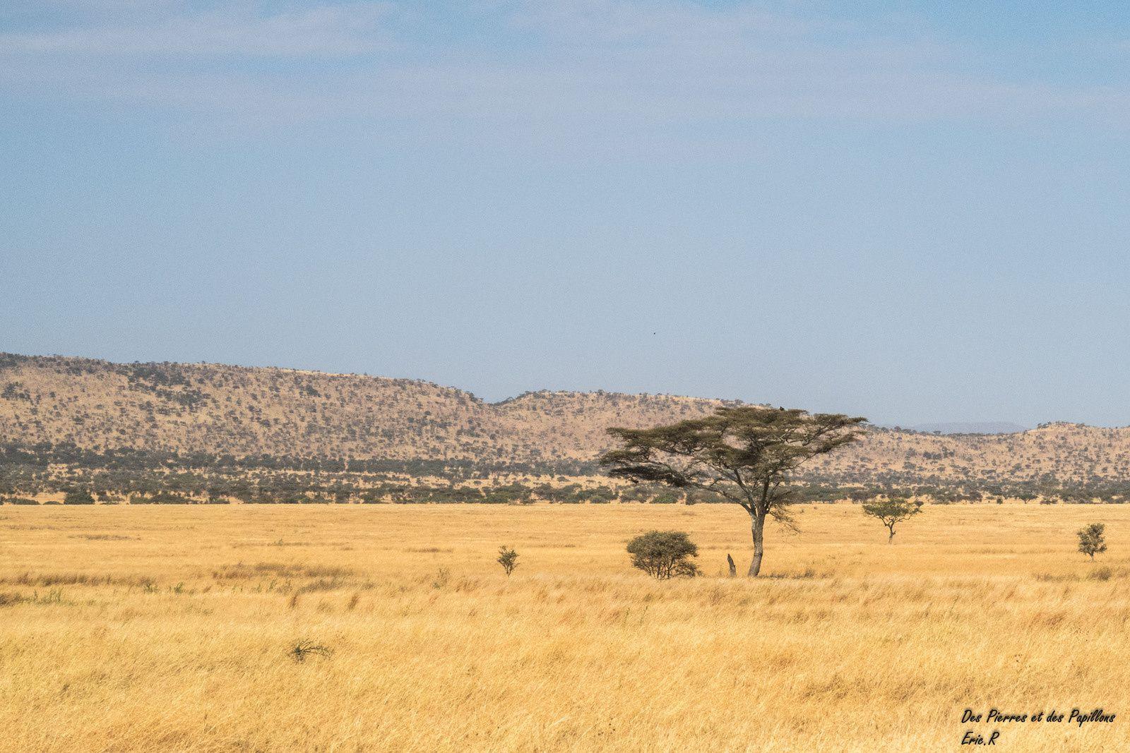 Paysages du Serengeti