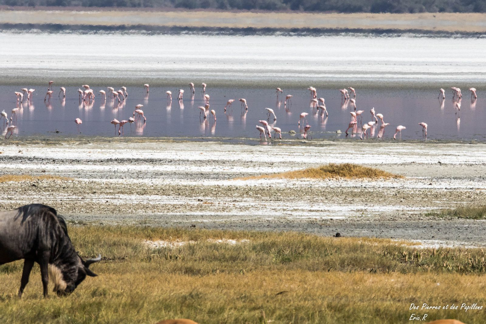 Quelques flamants roses