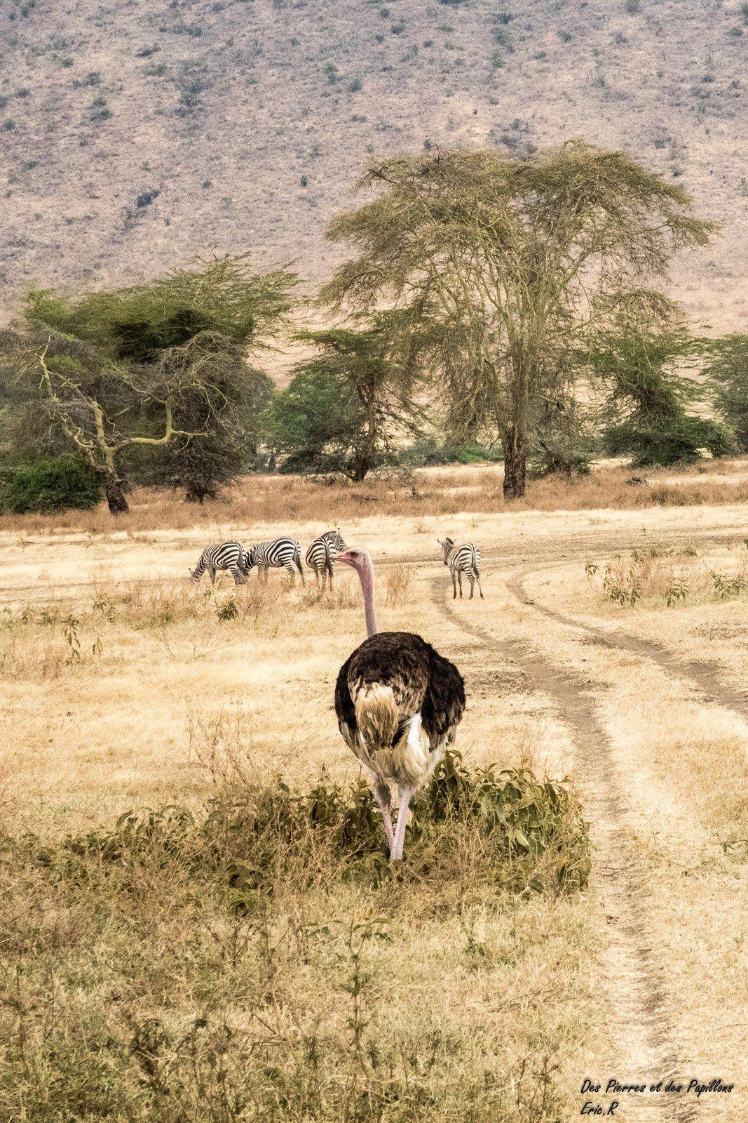 Tanzanie : le cratère du Ngorongoro !
