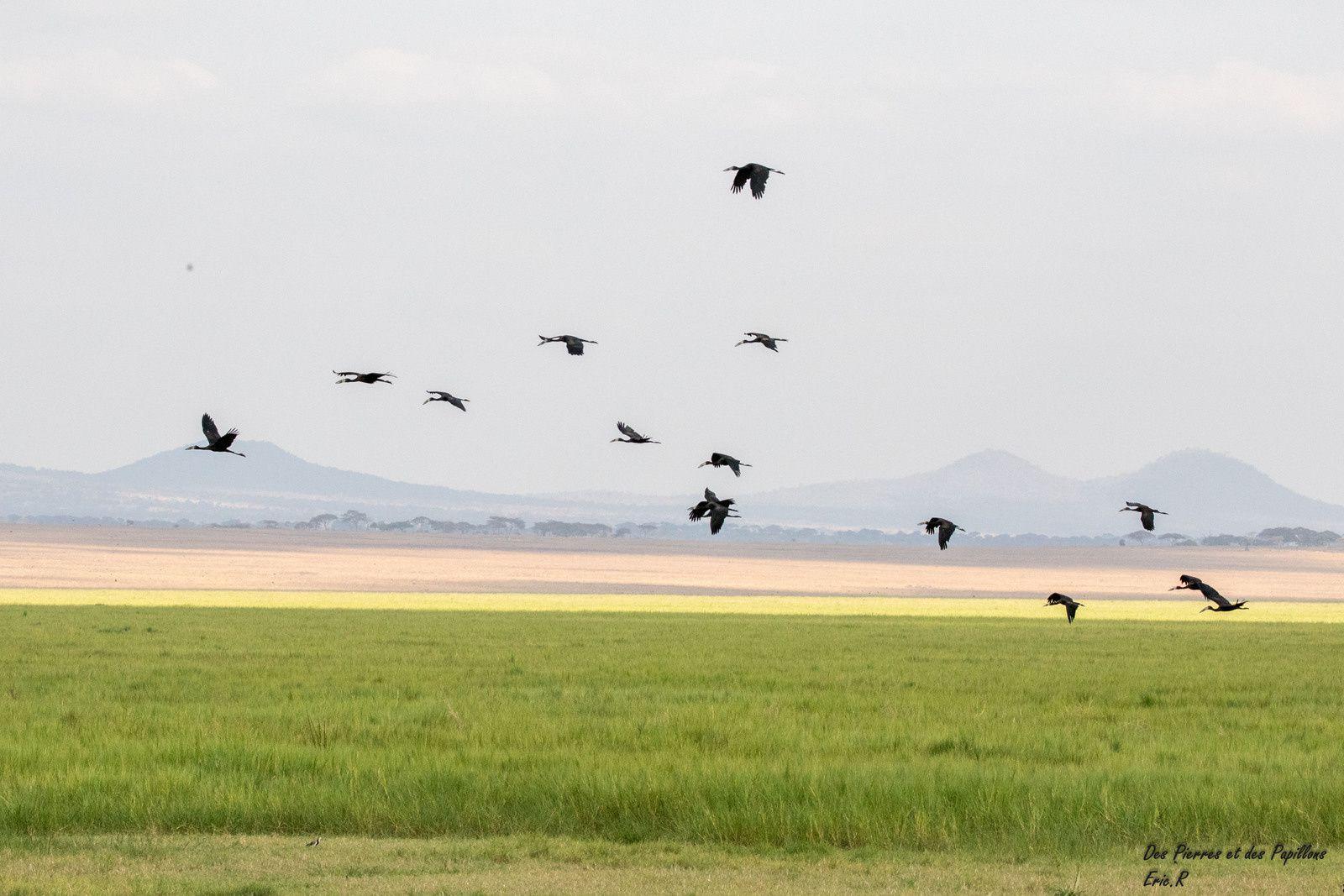 Tanzanie : le parc de Tarangire, des Baobabs et des Éléphants !