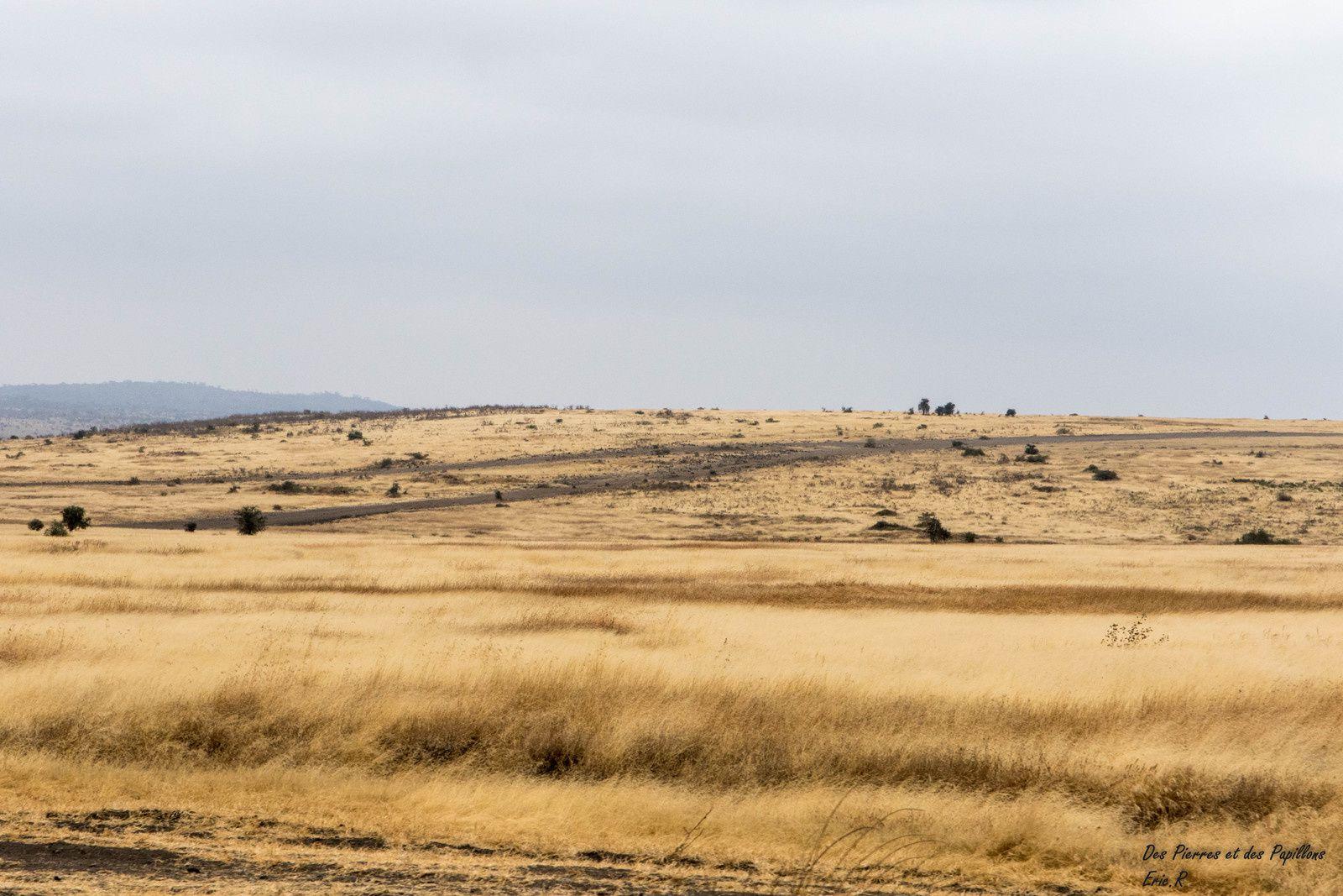 Tanzanie : dernier jour, dernière visite !