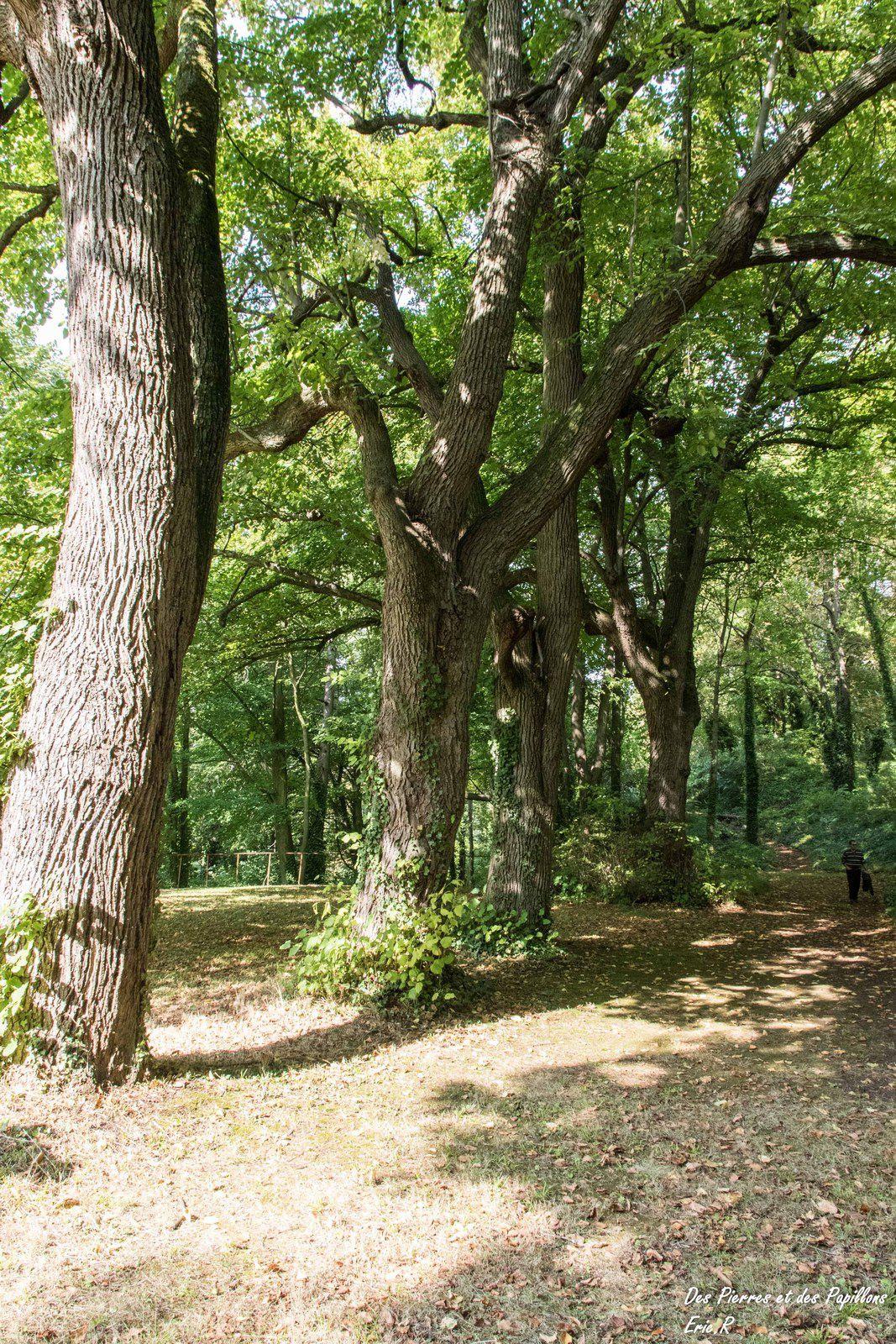 Des vues dans la forêt.