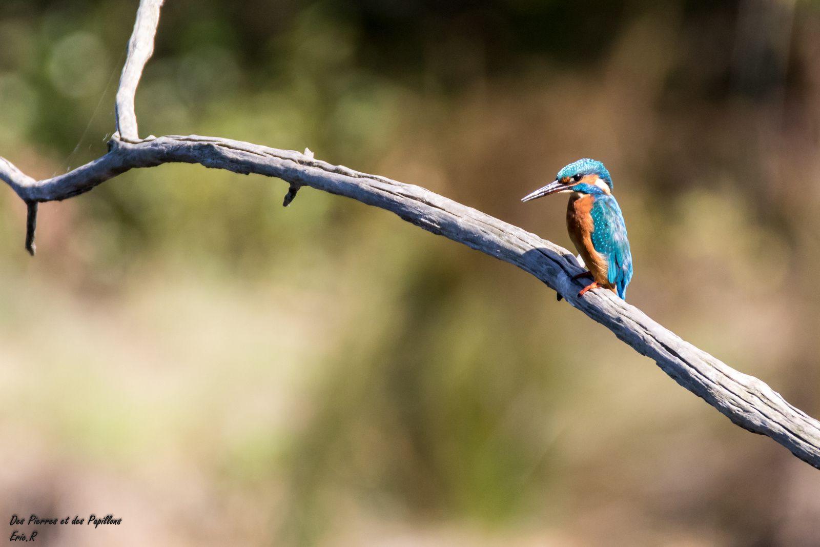 Le parc ornithologique du Teich - 1 ere partie !