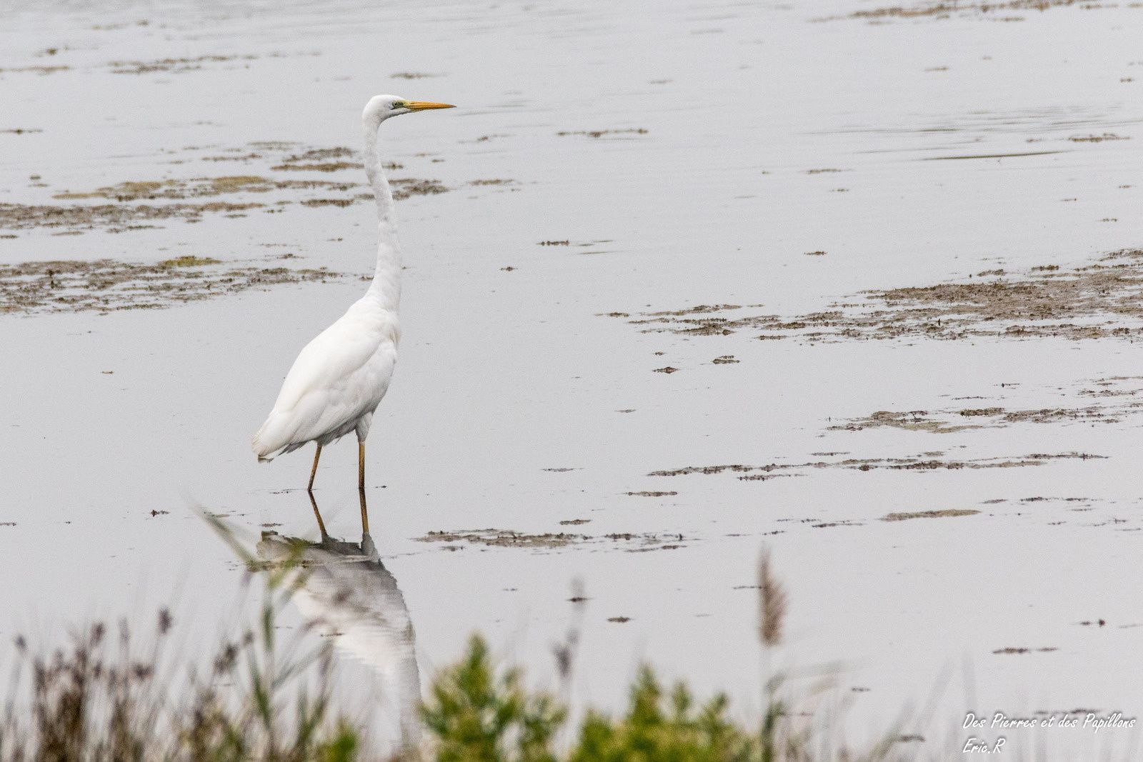 Le parc ornithologique du Teich : 2 eme partie