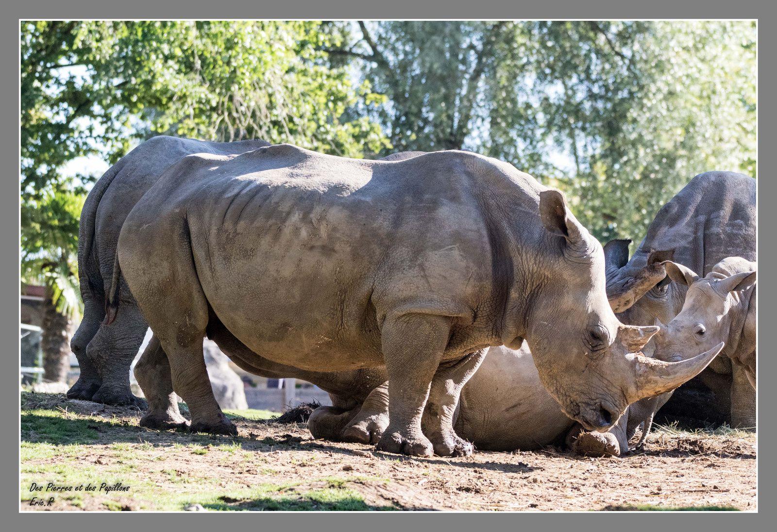 Retour au zoo de Beauval.