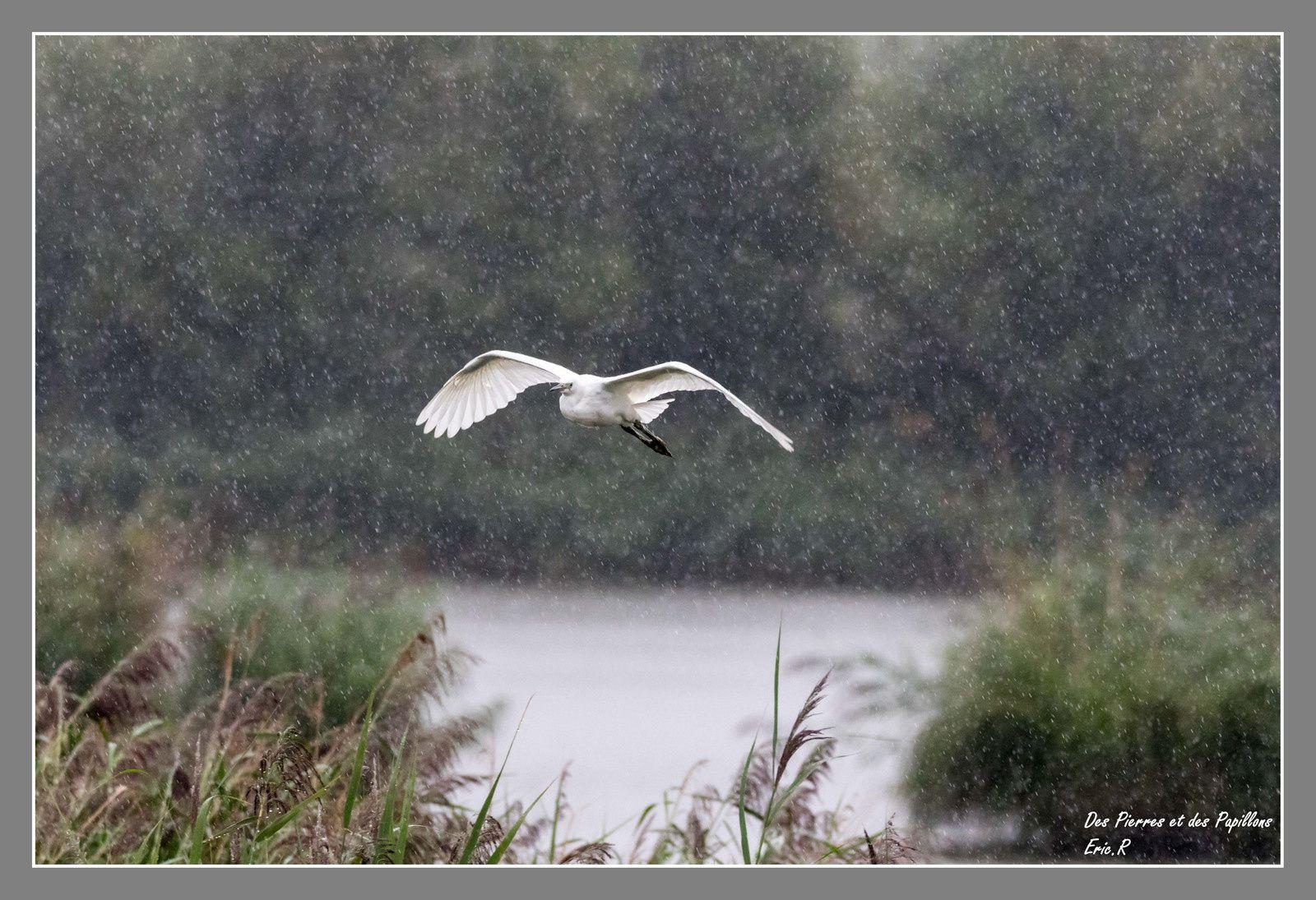 En plein vol et sous une pluie battante