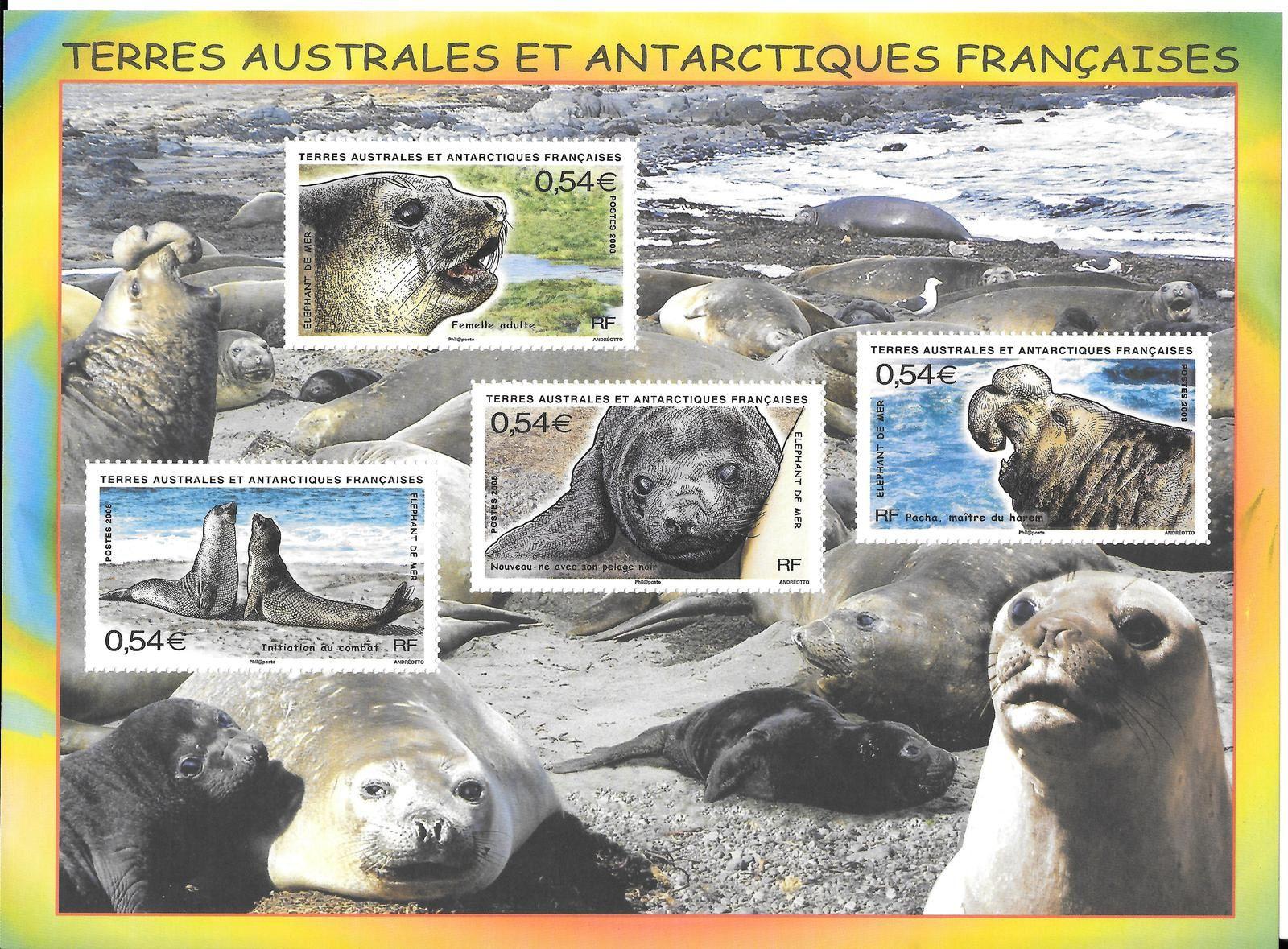 Harem d'éléphant de mer avec mâle et femelle adultes et nouveau-né (Feuillet Y&T 19)