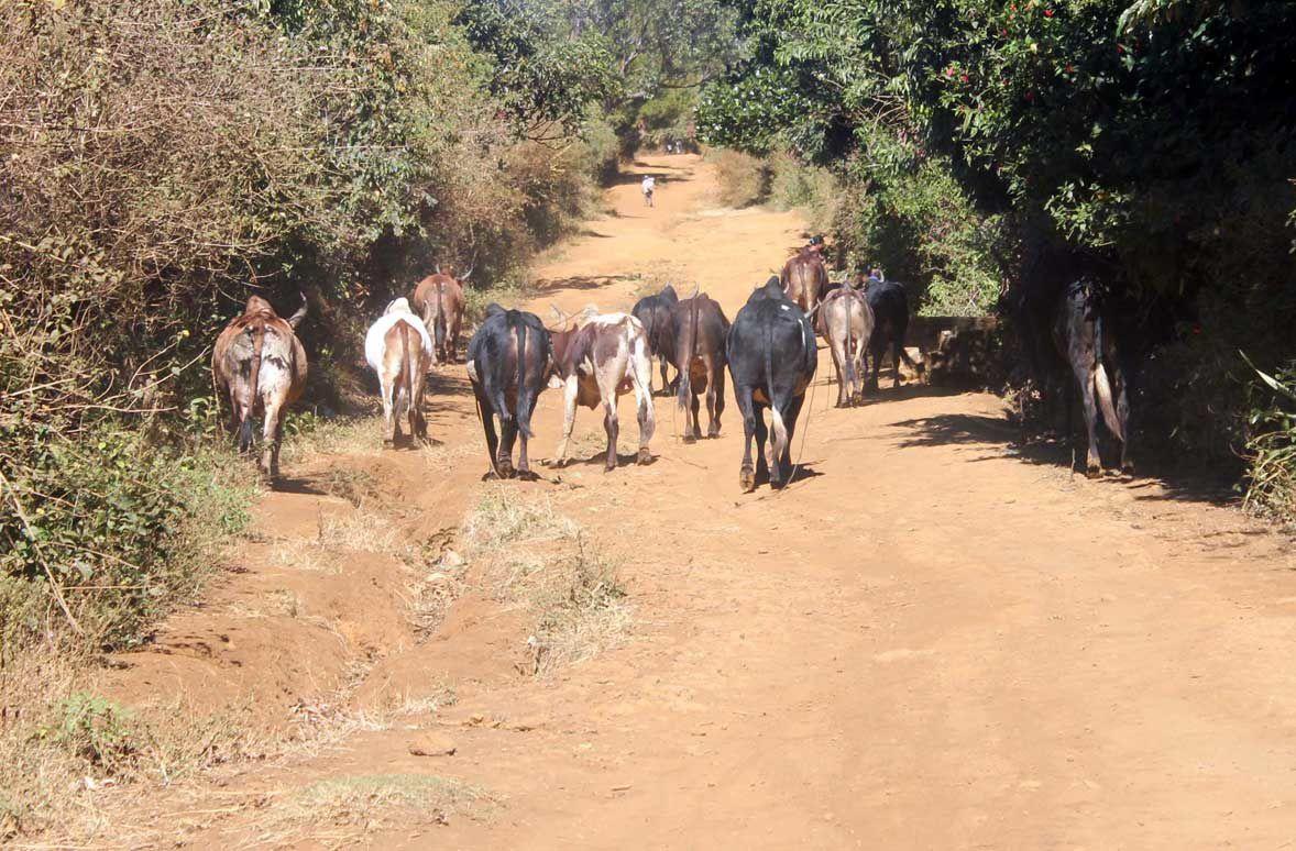 Chroniques malgaches (5) : La Montagne d'Ambre