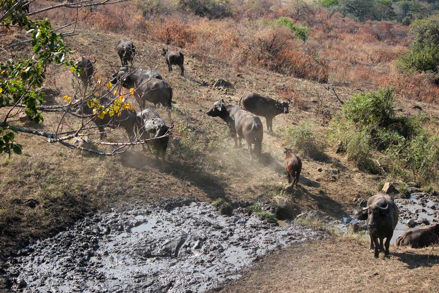 Vie sauvage (1) : Le Kwazulu-Natal