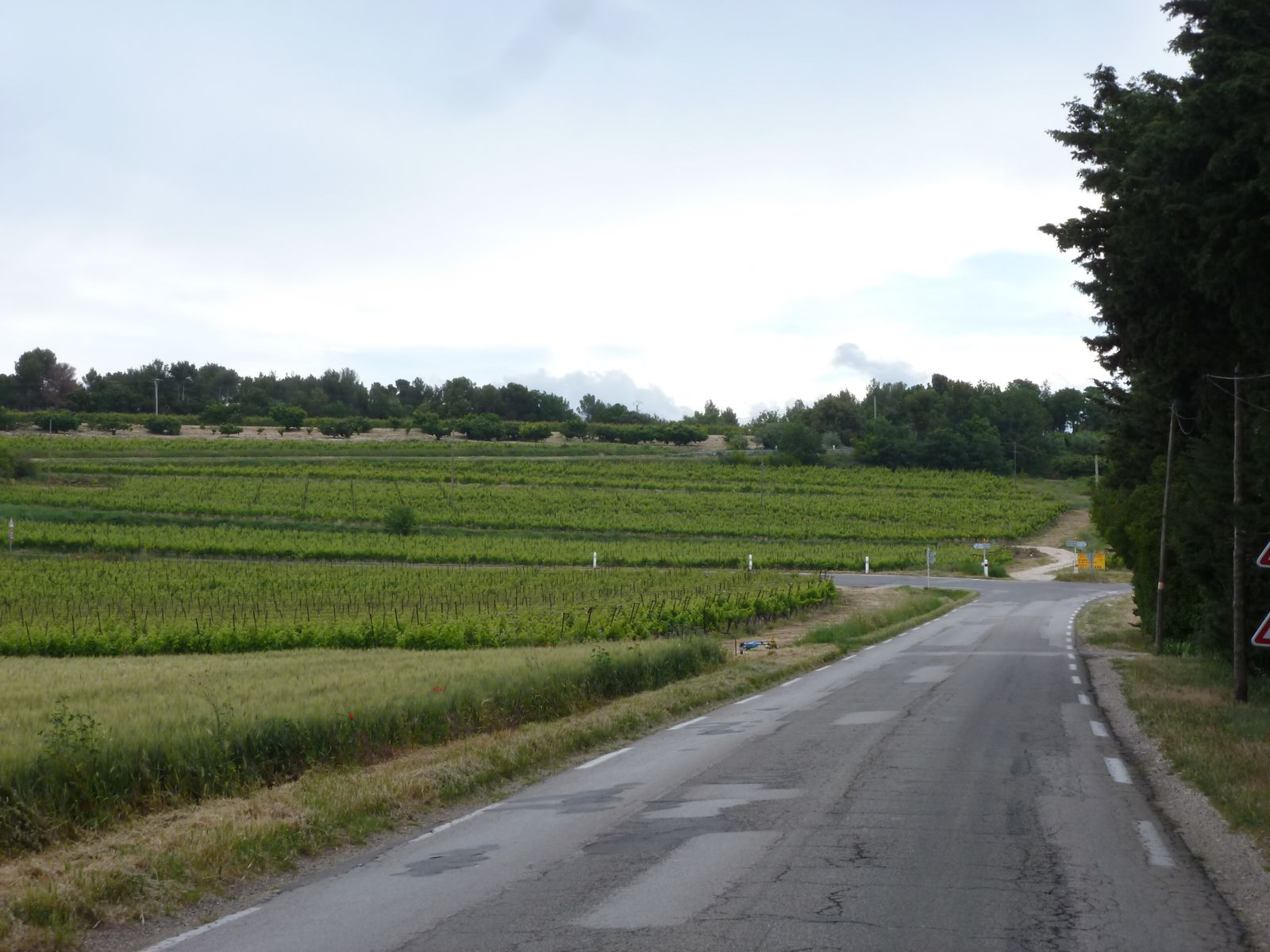 Vineyards - typical of the region