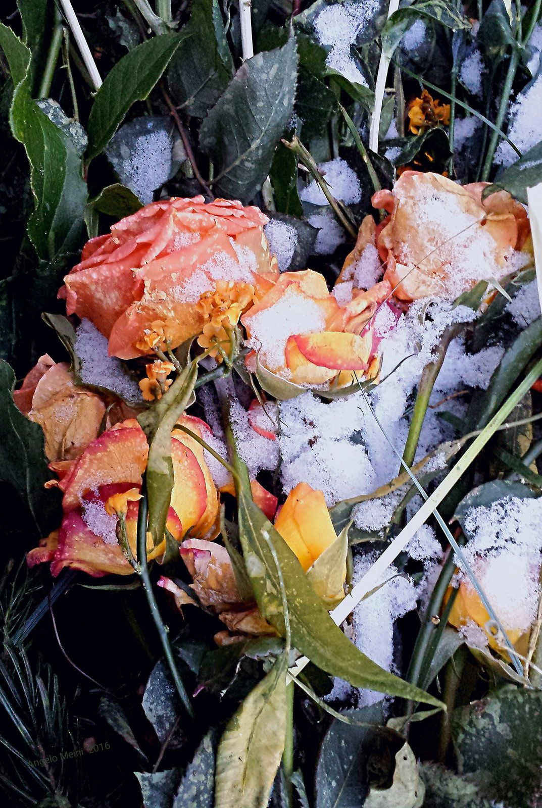Ice and Roses