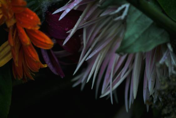 Colori di fiori