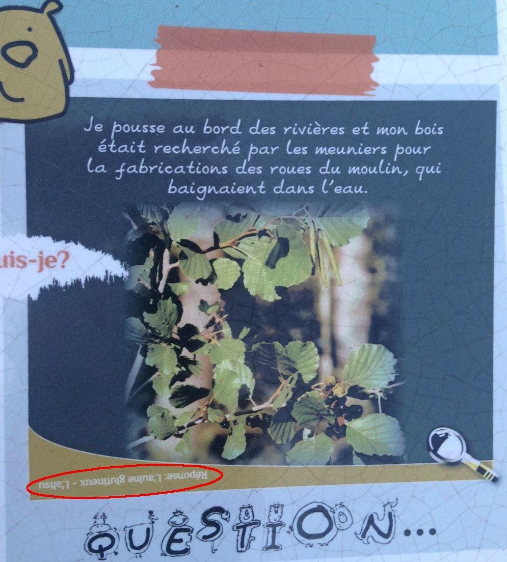 Réponse à la devinette du mois : quelle plante suis-je ?