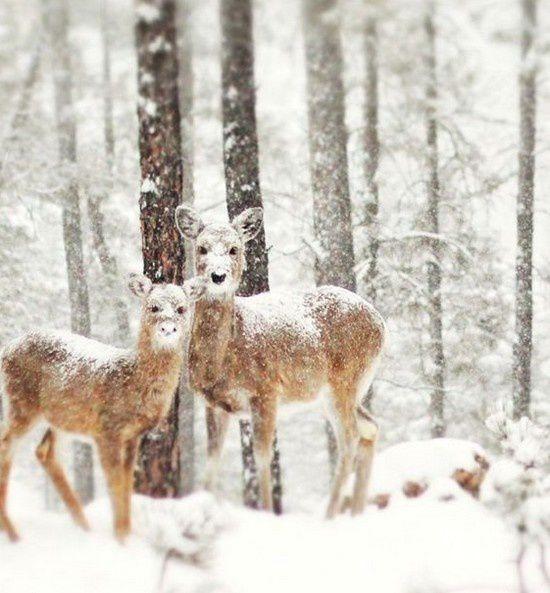 Un TAG dans la neige ....