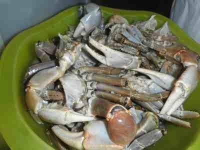crabe de terre, tué en enfonçant un couteau entre les 2 yeux (la carapace est plus fine que pour nos crabes), on enlève la coquille du corps, plein de graisse et on cuit les pattes et le corps à part.