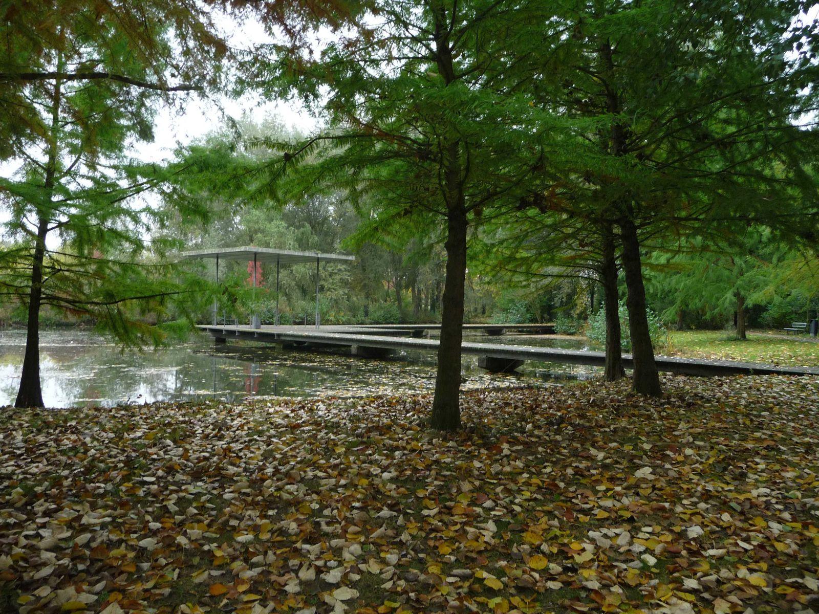 aujourd'hui c'est l'automne, les feuilles nous rappellent les souvenirs.