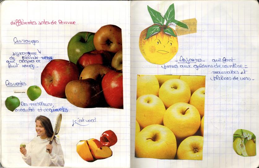 les différentes pommes. Les jaunes, ce sont les plus mauvaises!