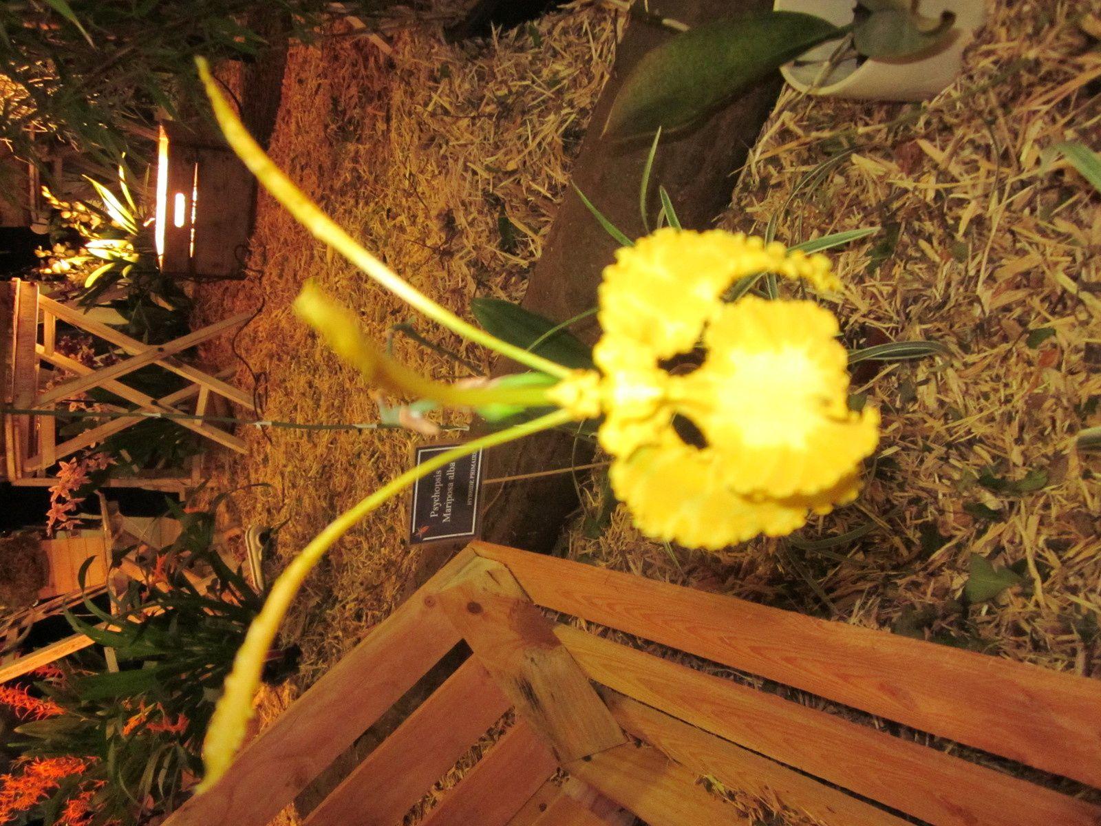 Salons des orchidées : les photos.
