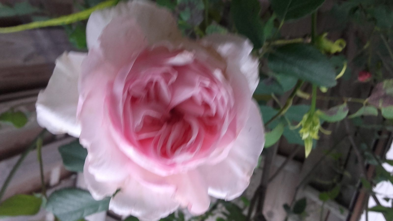 Mon petit jardin 2