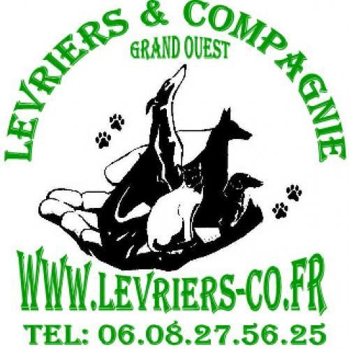 Association Lévriers et Compagnie