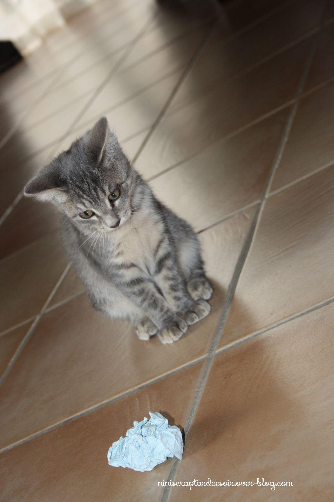 Petits cadeaux naissance... Et nom du chaton!
