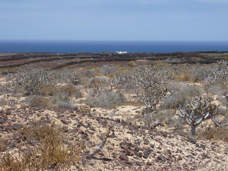 Du sable blanc à Lanzarote