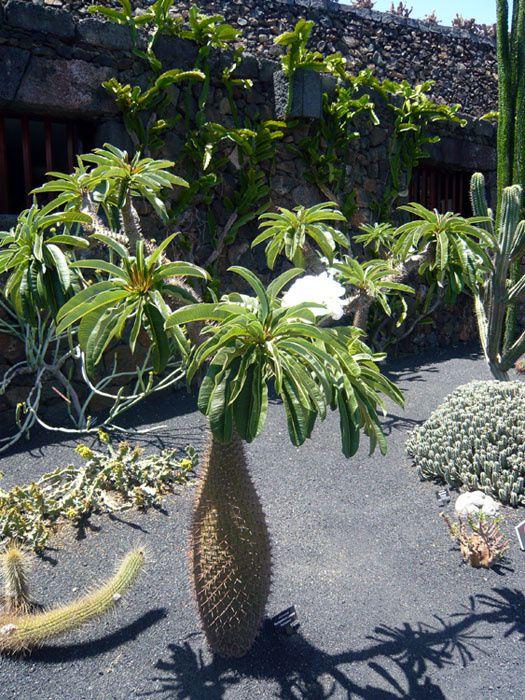 Cactus en arbre et fleurs