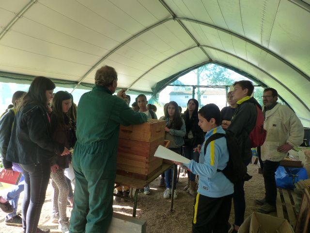 Visite du rucher école