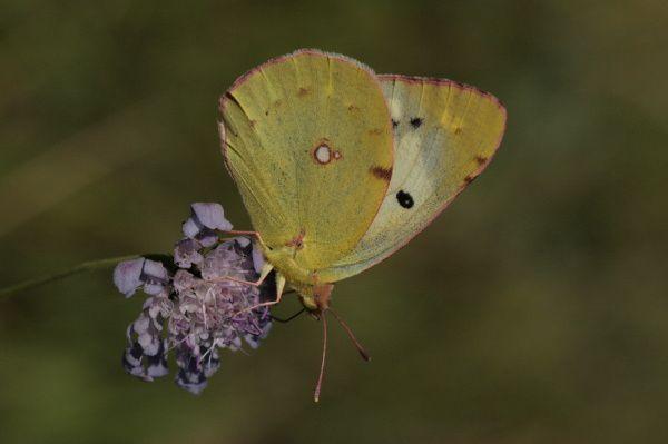 Une fleur, un papillon