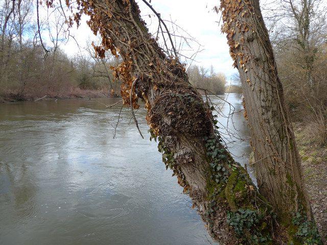 """La rivière Allier, qui a fait l'objet du dernier reportage """"Des Racines et des Ailes"""", gros succés."""