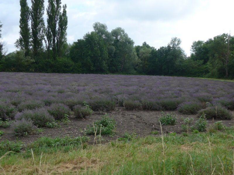 En Provence....?