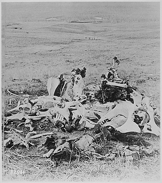 """Scene of Gen. Custer's last stand, looking in the direction of the ford and the Indian village."" A pile of bones--including the skeletons of cavalry horses--on the Little Big Horn battlefield--was all that remained, ca. 1877. From the National Archives."