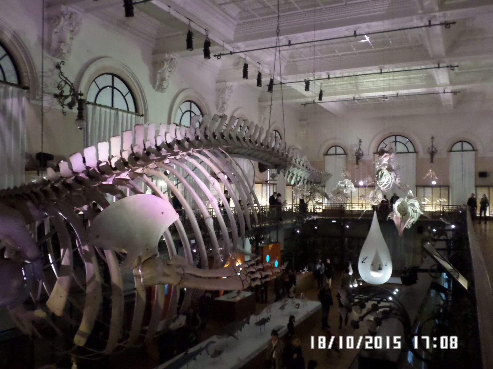 sortie musée océanographique de Monaco