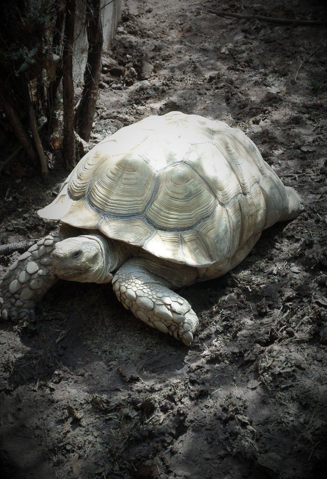 Sortie été 2016 : Le Village des tortues - Gonfaron (83)