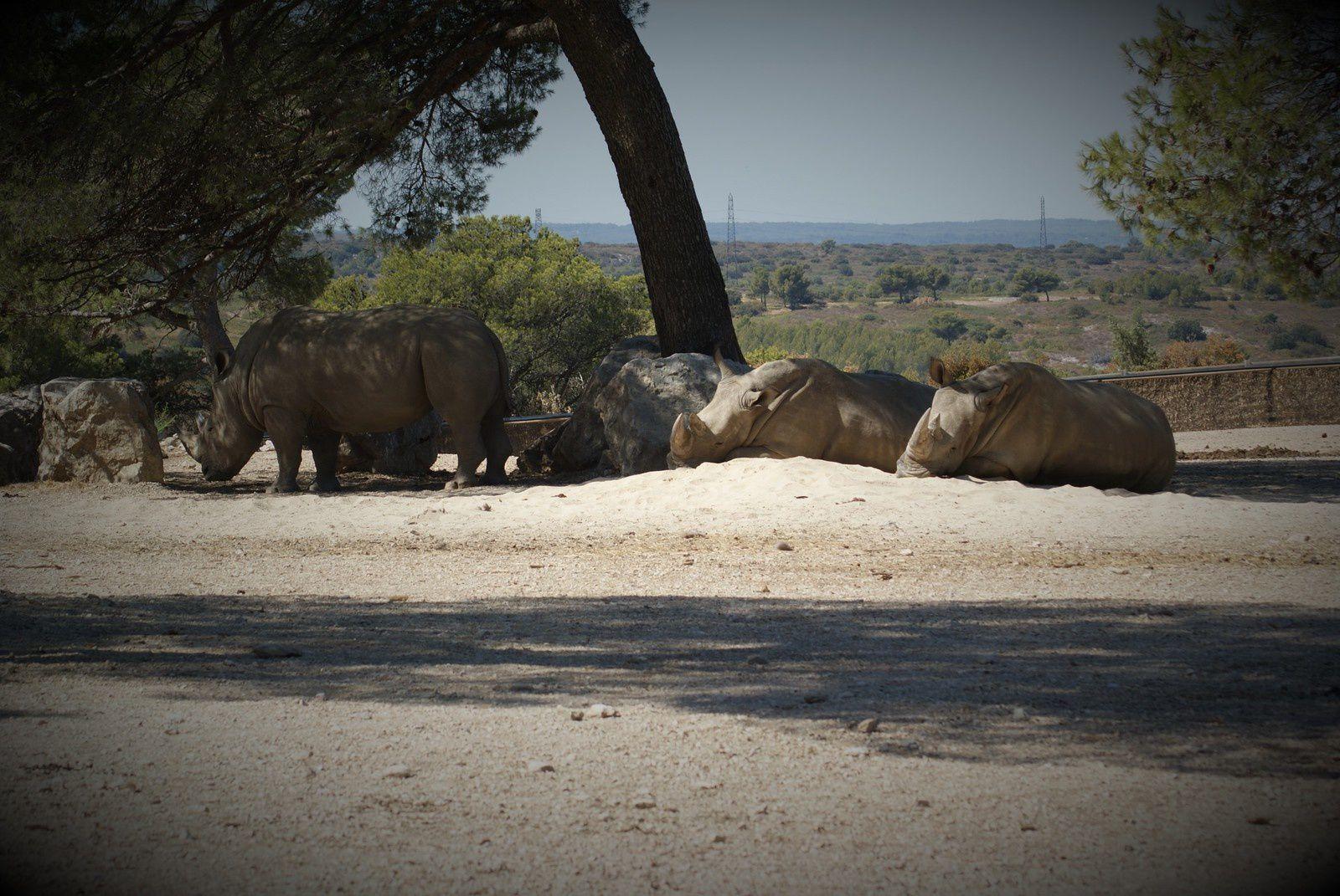 Sortie été 2016 : Le Zoo de La Barben
