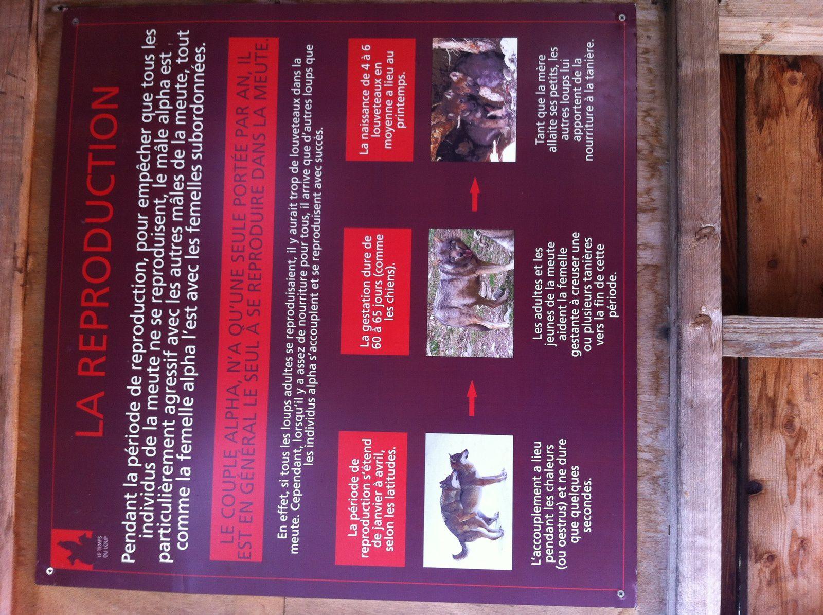 Sortie sympa : Parc animalier Alpha à Saint Martin Vésubie