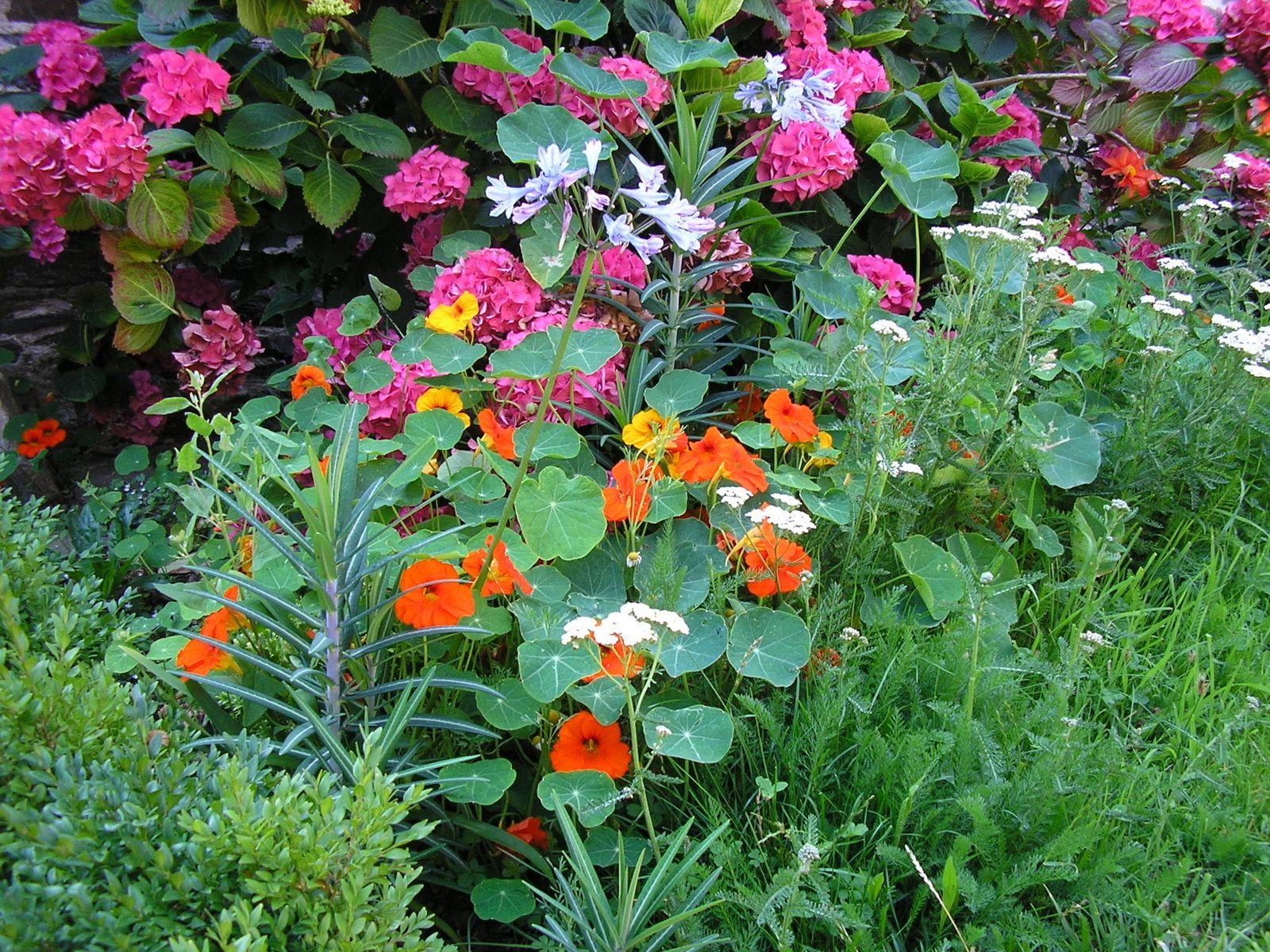 Mes jardins.......