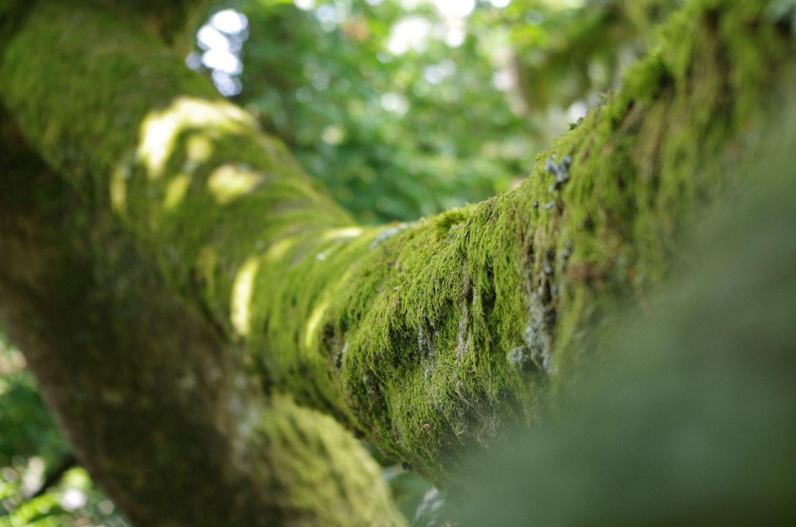 Chasse au Trésor en forêt de Fontainebleau
